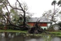 A tree lies on a house near Canal Point, Fla., Sunday, Sept. 26, 2004, in the aftermath of Hurricane Jeanne. (AP Photo/Luis M. Alvarez)