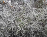 Highlight for album: Southeast ICE Storm 2005